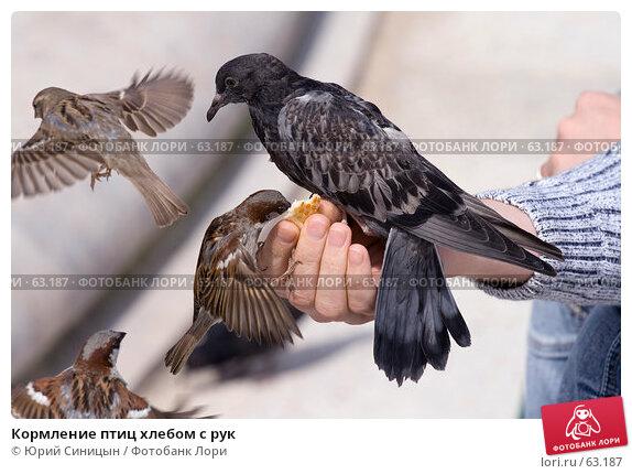 Кормление птиц хлебом с рук, фото № 63187, снято 23 июня 2007 г. (c) Юрий Синицын / Фотобанк Лори