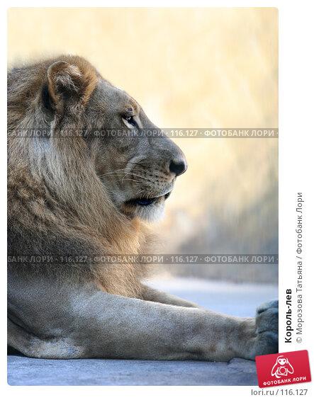 Король-лев, фото № 116127, снято 23 октября 2007 г. (c) Морозова Татьяна / Фотобанк Лори