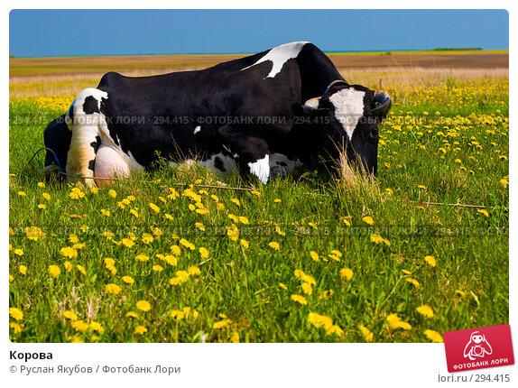 Купить «Корова», фото № 294415, снято 17 мая 2008 г. (c) Руслан Якубов / Фотобанк Лори