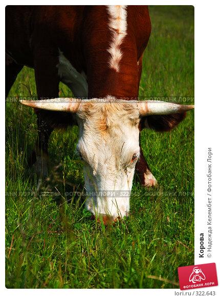 Корова, фото № 322643, снято 12 июня 2008 г. (c) Надежда Келембет / Фотобанк Лори