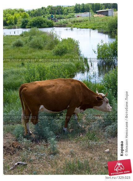 Корова, фото № 329023, снято 19 июня 2008 г. (c) Михаил Николаев / Фотобанк Лори