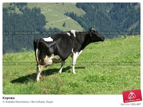 Корова. Стоковое фото, фотограф Natalia Nemtseva / Фотобанк Лори