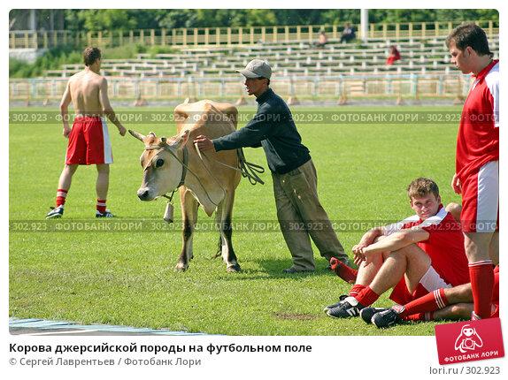 Корова джерсийской породы на футбольном поле, фото № 302923, снято 21 июня 2004 г. (c) Сергей Лаврентьев / Фотобанк Лори