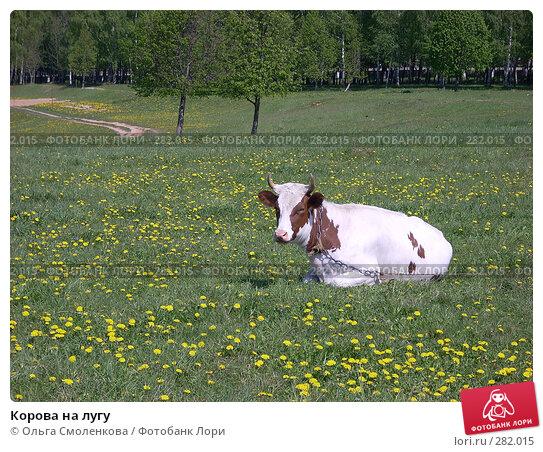Купить «Корова на лугу», фото № 282015, снято 12 мая 2008 г. (c) Ольга Смоленкова / Фотобанк Лори