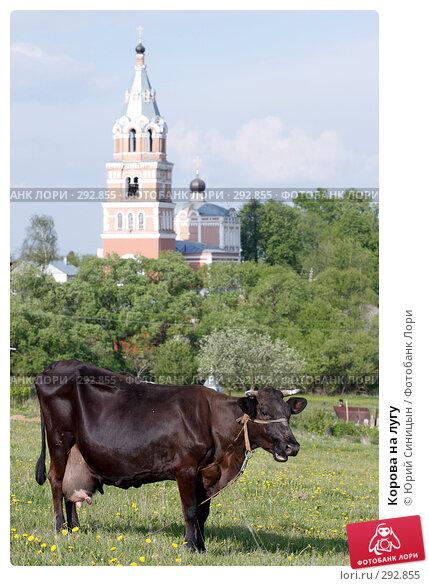 Корова на лугу, фото № 292855, снято 18 мая 2008 г. (c) Юрий Синицын / Фотобанк Лори