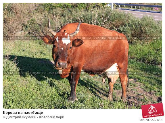 Купить «Корова на пастбище», эксклюзивное фото № 272615, снято 23 апреля 2008 г. (c) Дмитрий Неумоин / Фотобанк Лори
