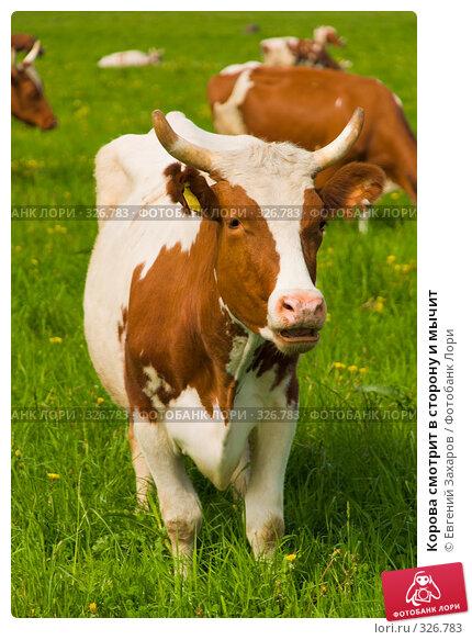 Корова смотрит в сторону и мычит, фото № 326783, снято 28 мая 2008 г. (c) Евгений Захаров / Фотобанк Лори