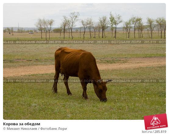 Корова за обедом, фото № 285819, снято 14 мая 2008 г. (c) Михаил Николаев / Фотобанк Лори