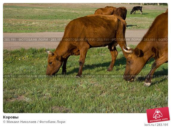 Коровы, фото № 283191, снято 13 мая 2008 г. (c) Михаил Николаев / Фотобанк Лори