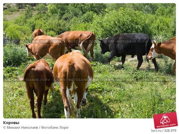 Купить «Коровы», фото № 328979, снято 19 июня 2008 г. (c) Михаил Николаев / Фотобанк Лори