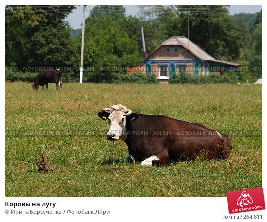 Коровы на лугу, фото № 264811, снято 17 июня 2007 г. (c) Ирина Борсученко / Фотобанк Лори