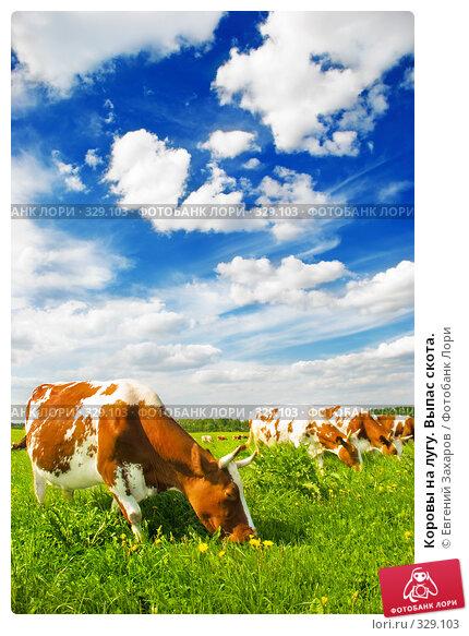 Коровы на лугу. Выпас скота., фото № 329103, снято 28 мая 2008 г. (c) Евгений Захаров / Фотобанк Лори
