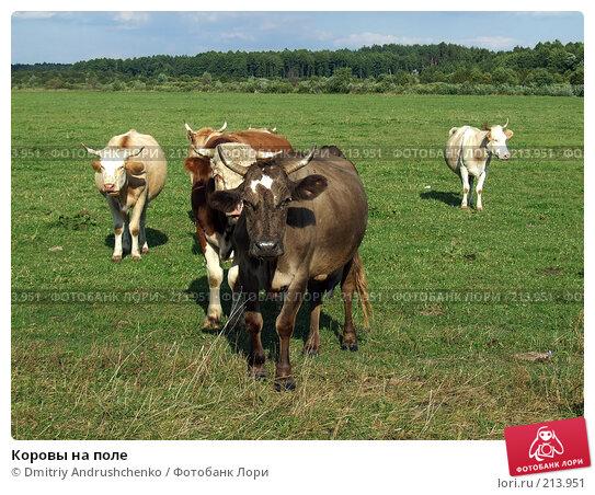Коровы на поле, фото № 213951, снято 30 августа 2007 г. (c) Dmitriy Andrushchenko / Фотобанк Лори