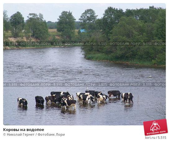 Коровы на водопое, фото № 5515, снято 19 июля 2005 г. (c) Николай Гернет / Фотобанк Лори