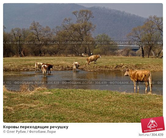 Коровы переходящие речушку, фото № 304439, снято 18 апреля 2008 г. (c) Олег Рубик / Фотобанк Лори