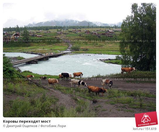 Коровы переходят мост, фото № 151619, снято 9 августа 2005 г. (c) Дмитрий Ощепков / Фотобанк Лори