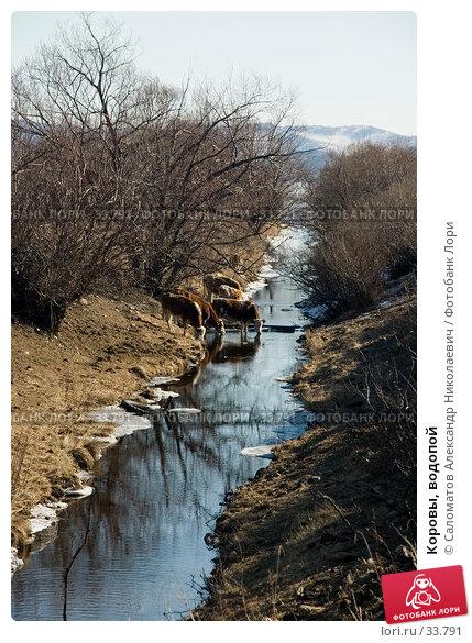 Коровы, водопой, фото № 33791, снято 17 марта 2007 г. (c) Саломатов Александр Николаевич / Фотобанк Лори