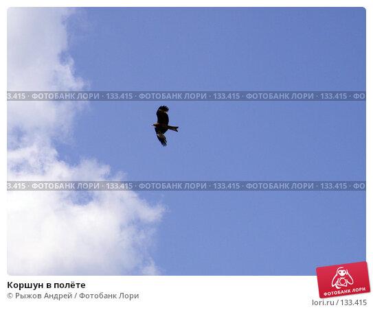 Коршун в полёте, фото № 133415, снято 28 июля 2007 г. (c) Рыжов Андрей / Фотобанк Лори
