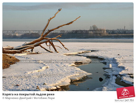 Коряга на покрытой льдом реке, фото № 247751, снято 8 января 2008 г. (c) Марченко Дмитрий / Фотобанк Лори