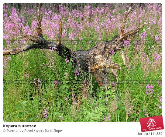 Коряга в цветах, фото № 111559, снято 16 июля 2006 г. (c) Parmenov Pavel / Фотобанк Лори