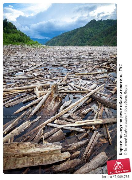 Купить «Коряги плывут по реке вблизи плотины ГЭС», фото № 7009755, снято 9 июля 2013 г. (c) Евгений Майнагашев / Фотобанк Лори