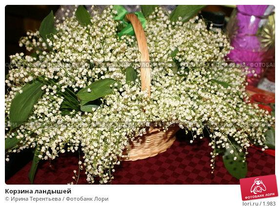Корзина ландышей, эксклюзивное фото № 1983, снято 28 мая 2005 г. (c) Ирина Терентьева / Фотобанк Лори