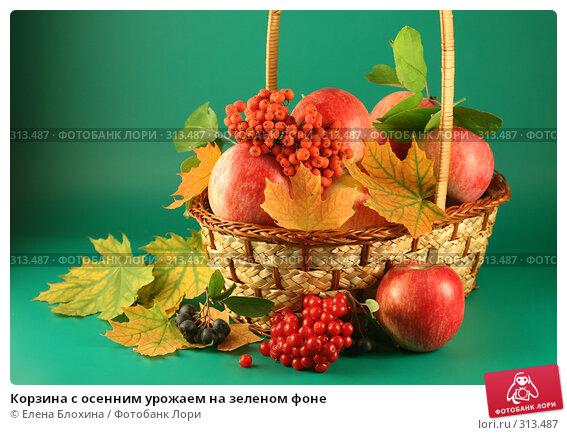 Купить «Корзина с осенним урожаем на зеленом фоне», фото № 313487, снято 13 сентября 2007 г. (c) Елена Блохина / Фотобанк Лори