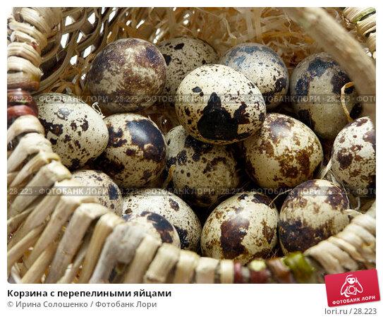 Купить «Корзина с перепелиными яйцами», фото № 28223, снято 21 марта 2007 г. (c) Ирина Солошенко / Фотобанк Лори