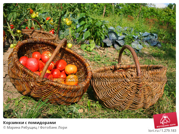 Корзинки с помидорами. Стоковое фото, фотограф Марина Рябущиц / Фотобанк Лори