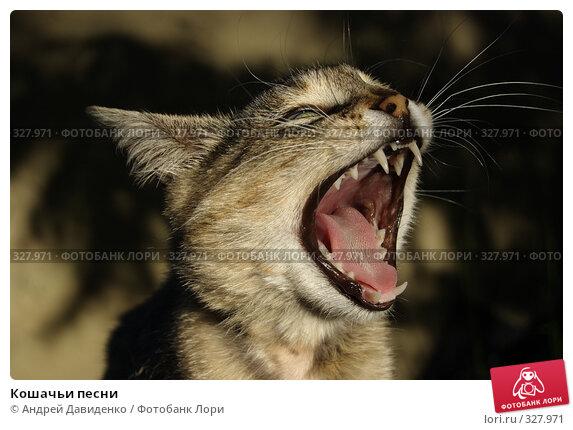 Кошачьи песни, фото № 327971, снято 6 июня 2008 г. (c) Андрей Давиденко / Фотобанк Лори