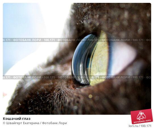 Кошачий глаз, фото № 100171, снято 13 июля 2007 г. (c) Швайгерт Екатерина / Фотобанк Лори