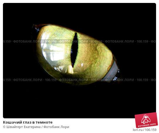 Купить «Кошачий глаз в темноте», фото № 100159, снято 13 июля 2007 г. (c) Швайгерт Екатерина / Фотобанк Лори