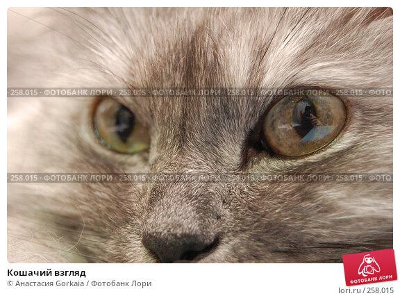 Кошачий взгляд, фото № 258015, снято 3 апреля 2008 г. (c) Анастасия Gorkaia / Фотобанк Лори