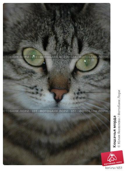 Кошачья морда, фото № 651, снято 9 февраля 2004 г. (c) Юлия Яковлева / Фотобанк Лори