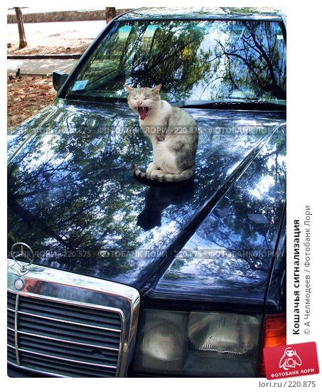 Кошачья сигнализация, фото № 220875, снято 1 сентября 2007 г. (c) A Челмодеев / Фотобанк Лори