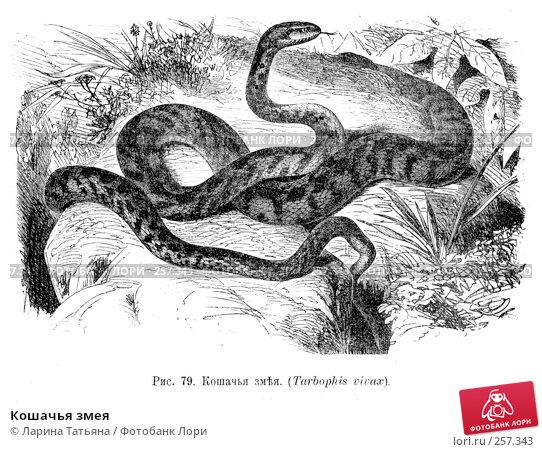 Кошачья змея, фото № 257343, снято 3 декабря 2016 г. (c) Ларина Татьяна / Фотобанк Лори