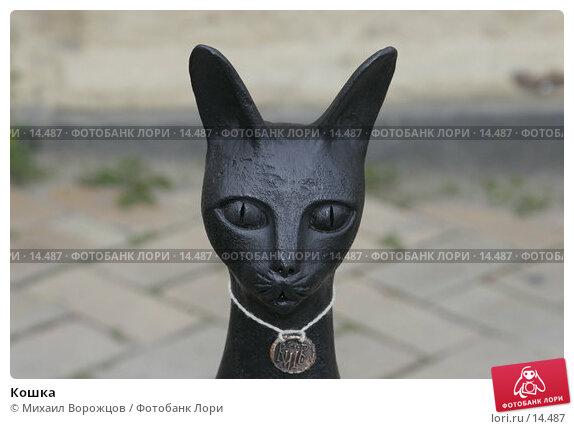 Кошка, фото № 14487, снято 10 июня 2006 г. (c) Михаил Ворожцов / Фотобанк Лори