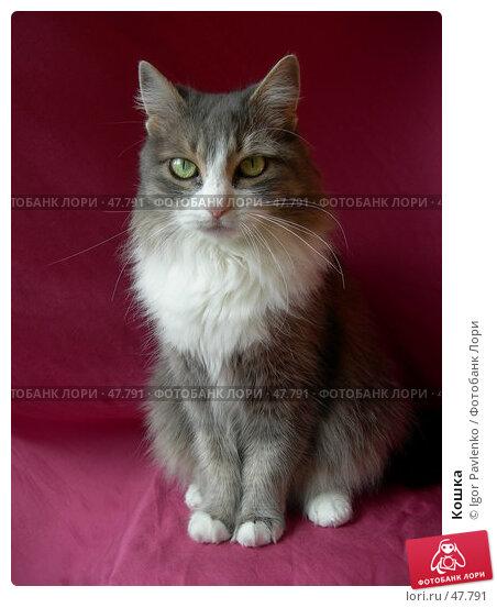 Кошка, фото № 47791, снято 27 апреля 2007 г. (c) Igor Pavlenko / Фотобанк Лори