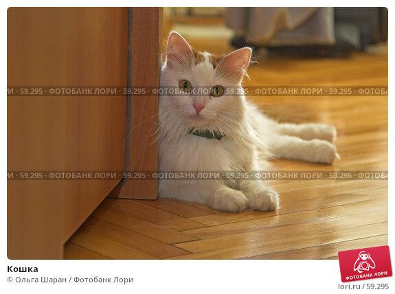 Кошка, фото № 59295, снято 15 июня 2007 г. (c) Ольга Шаран / Фотобанк Лори