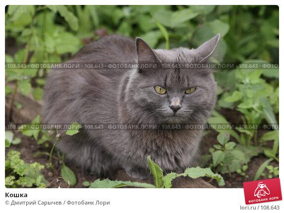 Кошка, фото № 108643, снято 8 июля 2007 г. (c) Дмитрий Сарычев / Фотобанк Лори