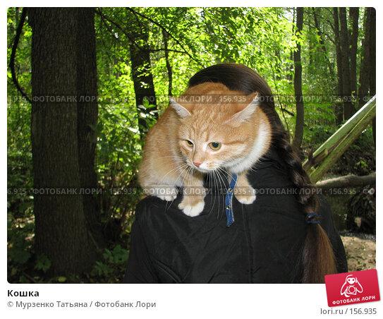 Купить «Кошка», фото № 156935, снято 16 сентября 2006 г. (c) Мурзенко Татьяна / Фотобанк Лори