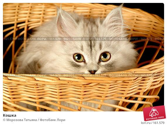Кошка, фото № 161579, снято 21 октября 2016 г. (c) Морозова Татьяна / Фотобанк Лори