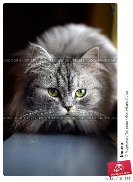 Кошка, фото № 161583, снято 9 января 2004 г. (c) Морозова Татьяна / Фотобанк Лори