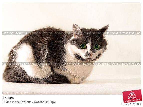 Кошка, фото № 162599, снято 18 февраля 2005 г. (c) Морозова Татьяна / Фотобанк Лори