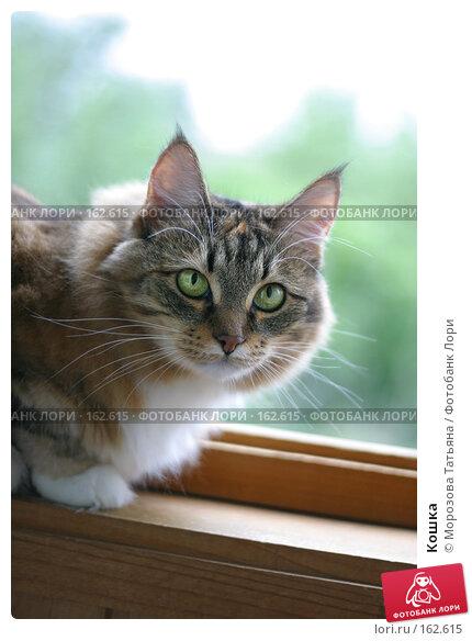 Кошка, фото № 162615, снято 12 августа 2006 г. (c) Морозова Татьяна / Фотобанк Лори