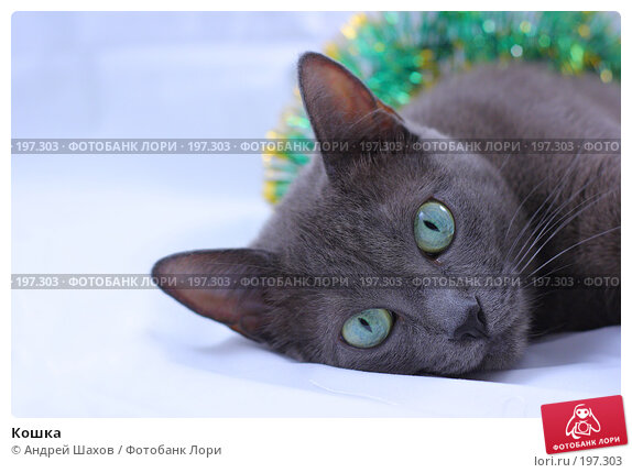 Кошка, фото № 197303, снято 22 января 2008 г. (c) Андрей Шахов / Фотобанк Лори