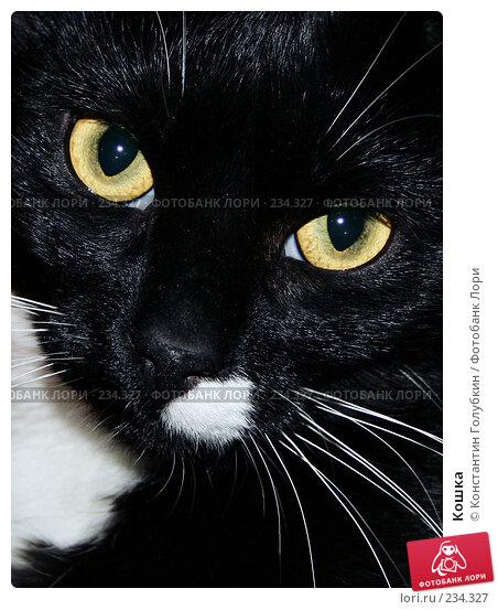 Кошка. Стоковое фото, фотограф Константин Голубкин / Фотобанк Лори