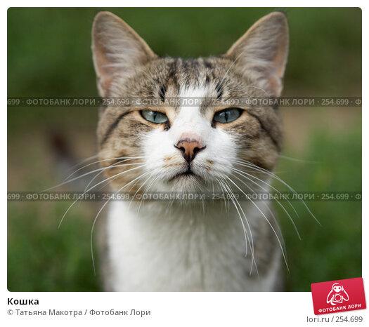 Кошка, фото № 254699, снято 7 августа 2006 г. (c) Татьяна Макотра / Фотобанк Лори