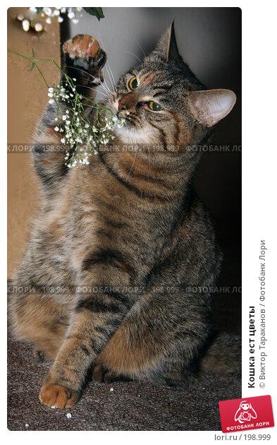 Кошка ест цветы, эксклюзивное фото № 198999, снято 7 февраля 2008 г. (c) Виктор Тараканов / Фотобанк Лори