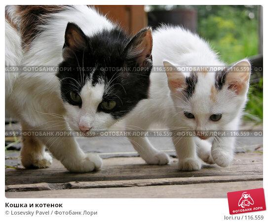 Кошка и котенок, фото № 116559, снято 17 июля 2004 г. (c) Losevsky Pavel / Фотобанк Лори